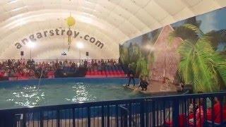 Видео со шоу дельфинов