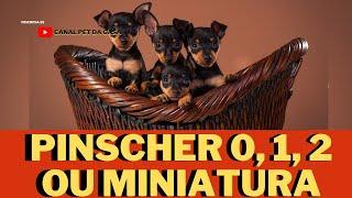 Pinscher 0, 1, 2 ou miniatura