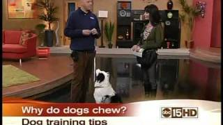 Break Bad Habits Through Doggie Steps Dog Training