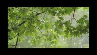 Rinai Hujan ~ Bornok Hutauruk
