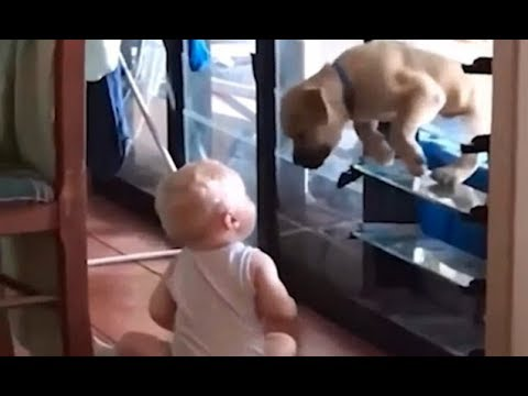 Baby helps puppy through window in adorable video