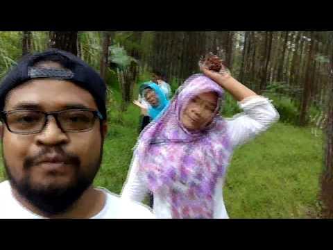 MBOLANG Di Hutan Pinus Plutan Purworejo