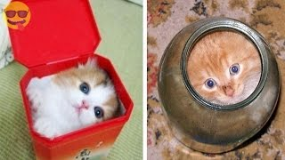 Pictures that Prove Cats Are Liquid