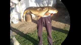 рыбалка с острогой/бесстрашные ондатры (fishing with a harpoon)