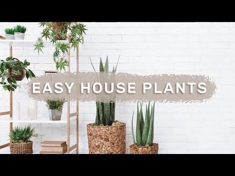 5 BEST INDOOR PLANTS for beginners // easy care house plants