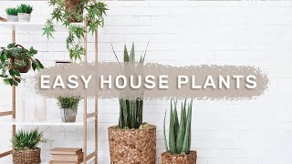5 SUPER EASY House Plants FOR BEGINNERS // low care indoor plants