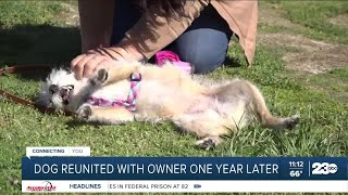 Dog reunited with owner one year later