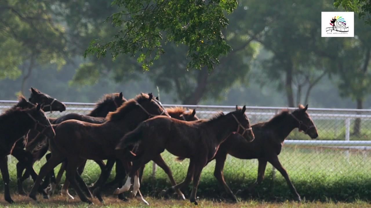 30  Schönheit darshan horse for Darshan Horse Farm  143gtk