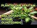 PLANTAS QUE AFASTAM MAL OLHADO, INVEJA E OLHO GORDO