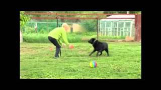 Гостиница для собак в Петербурге