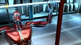 Как растут мышцы?(Видеоролик о стероидах и о том, как растут мышцы. Подробнее, здесь: 1) http://ferrum-body.ru/kak-rastut-myishtsyi.html 2) http://ferrum-body.r..., 2013-02-18T07:10:07.000Z)