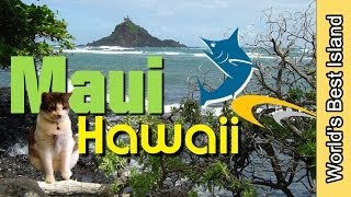 Maui Hawaii Best Of Video - Enjoy Each Day In Maui to The Max