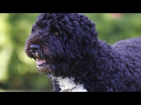 رحيل أحد نجوم البيت الأبيض بعد صراع مع مرض السرطان.. أوباما ينعى كلبه -بو-…  - نشر قبل 13 ساعة