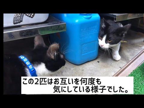 Mari Fさんの娘さん作! 保護猫の里帰り②