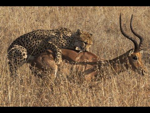 Kruger National Park Dog Saves