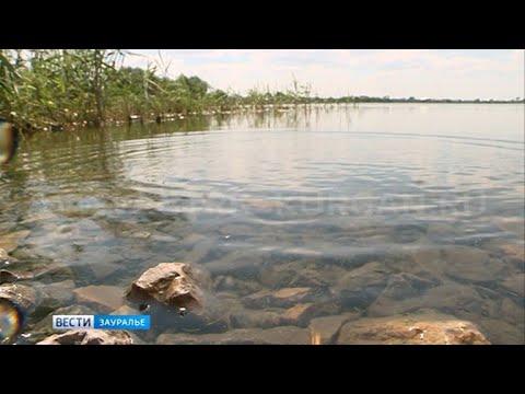 В Макушинском районе разбираются, почему погибла рыба