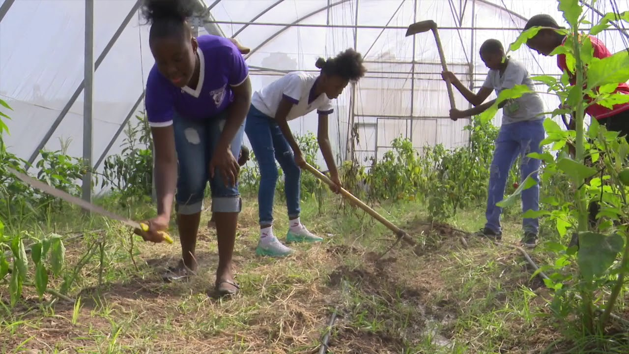 Protected Agriculture: a Voices for Climate Change Education 2019 PSA