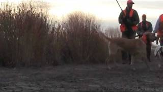 2011 Bird Dogs For Habitat Campaign