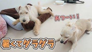犬のひみつきちホームページ:https://www.dogs-base.com/ チワックス ...