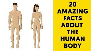 20 Amazing Facts about the Human Body you probably didn't know