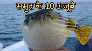 समुद्र के १० विचित्र और भयानक मछलियां 10 Creepy Sea Fishes You Didn't Know Existed