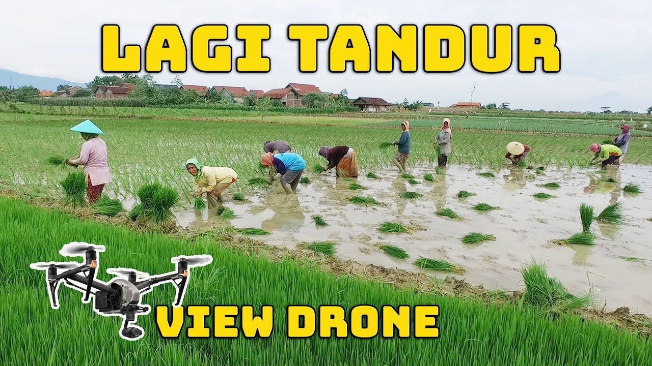 Drone Lupa