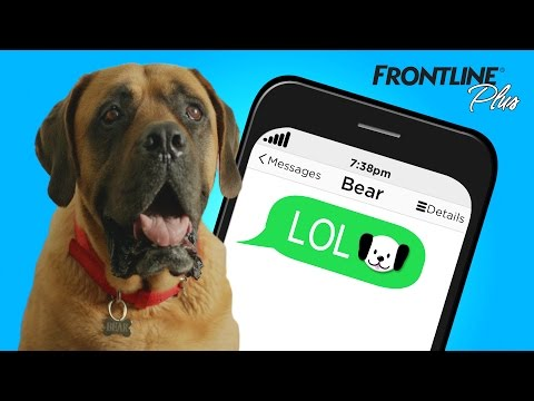 if-your-dog-could-text-you
