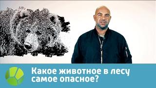 Какое животное в лесу самое опасное? Живая планета отвечает
