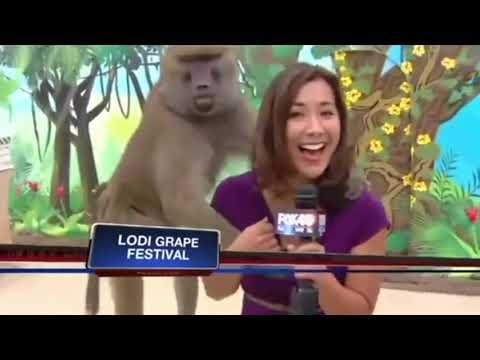 Top 10 Best Animal News Bloopers