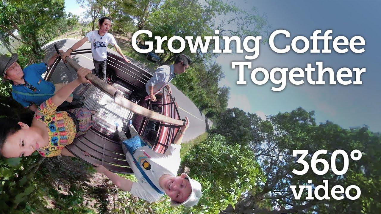 Growing Coffee in Guatemala - 360 Video