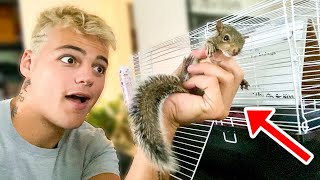 My *RESCUED* PET BABY SQUIRREL!! (what happened)