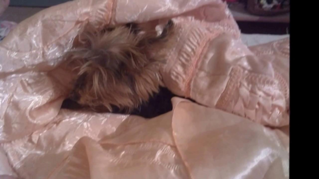 Berceuse pour un petit chien  (Oceano Vox)