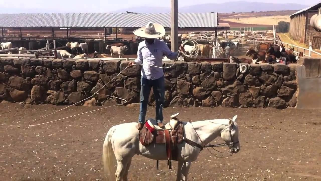 a7ef6ae1e86ea Mexican Cowboy Show - YouTube