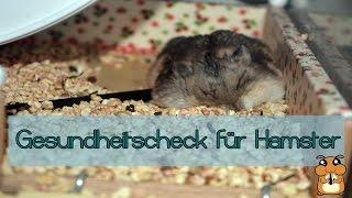 Gesundheitscheck für Hamster