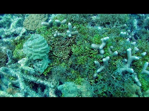 We Can Save Coral Reefs