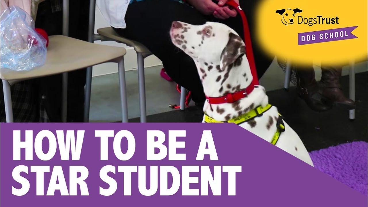 Dog & Puppy Training Classes Near Me | Dogs Trust Dog School