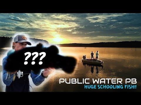 HUGE Schooling Bass!! (Public Water PB) Calling Panther Lake