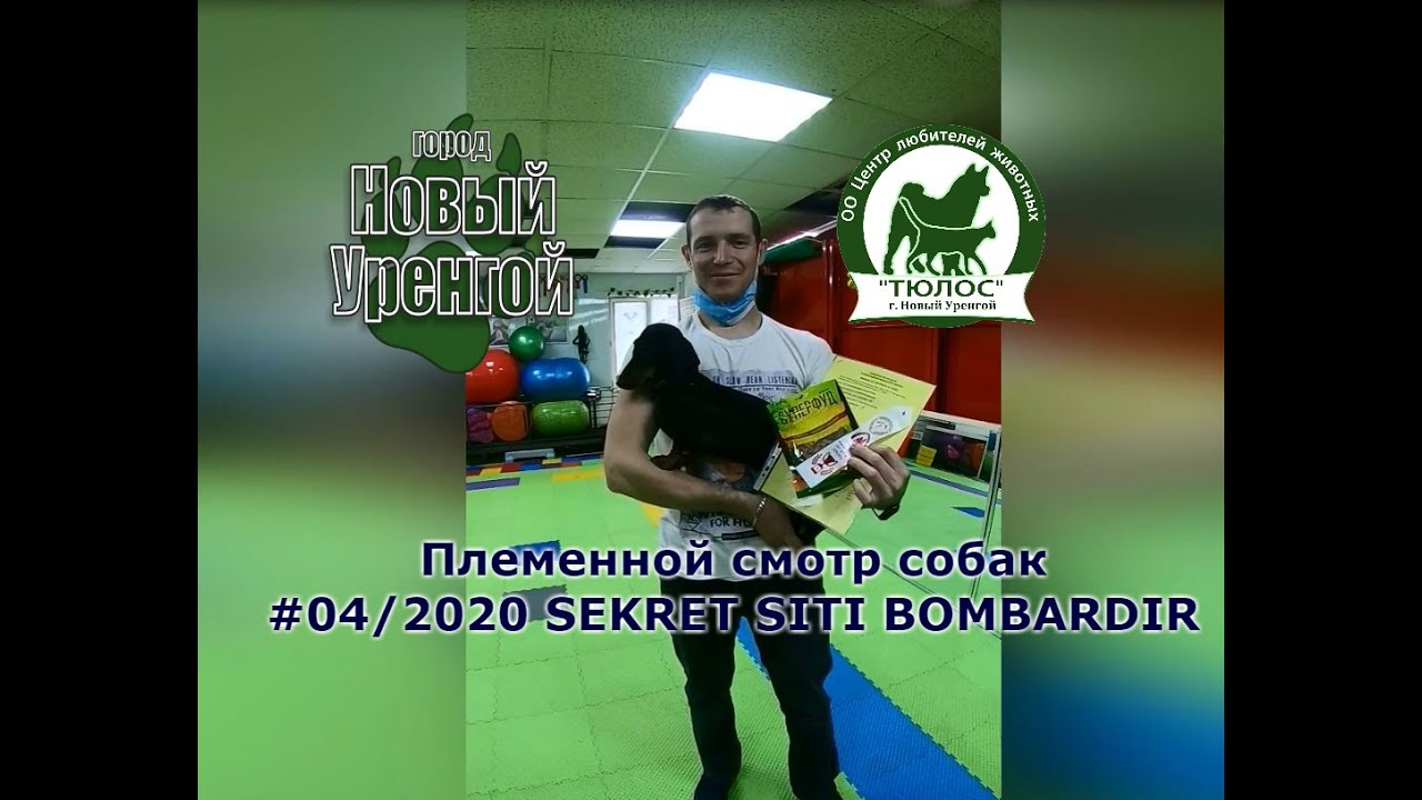 200606 04 2020 Такса мини гш SEKRET SITI BOMBARDIR - YouTube