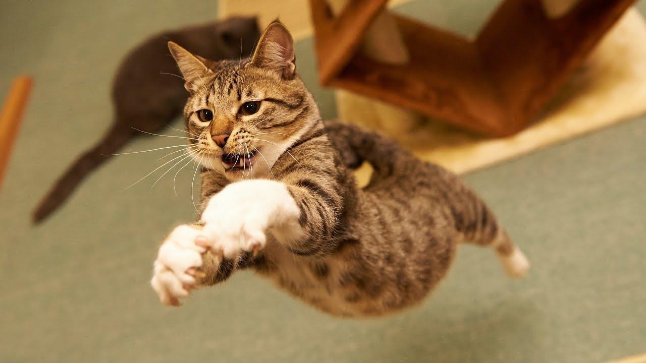 Funny Cat Videos Jump Fail