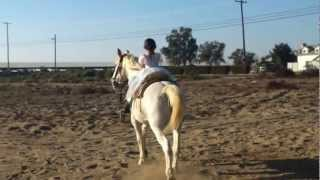 Little girl rides horse like pro