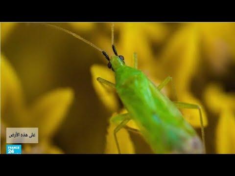 فرنسا: حشرات تعوض المبيدات الكيميائية في خدمة الفلاحين!  - نشر قبل 4 ساعة