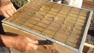 Bee Movie 5 - Honey Extraction
