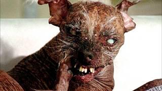 Самая ЖУТКАЯ собака в мире!