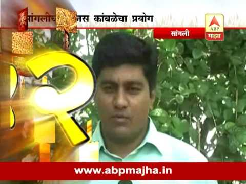 712 : Kolhapur : Aquaponic farming : Vegitable & Fishg Farming