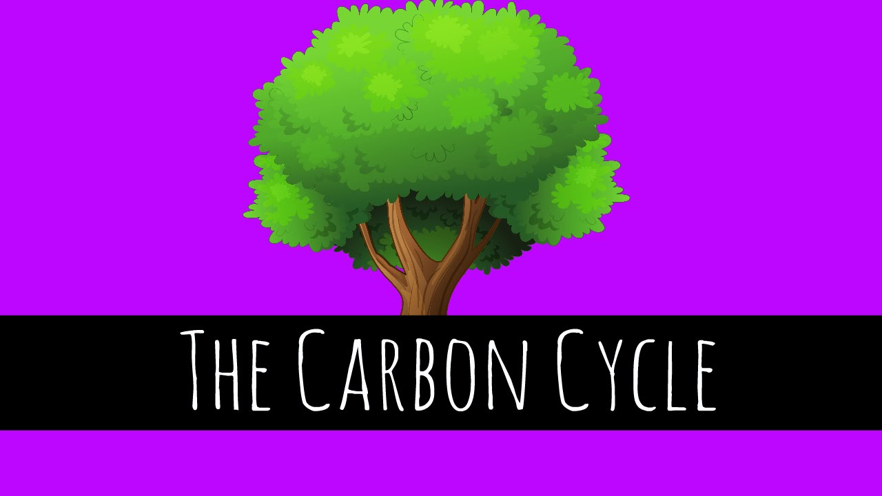 The Carbon Cycle Diagram Gcse 1998 Dodge Ram 2500 Headlight Switch Wiring What Is Biology Youtube