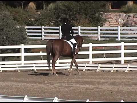 SOLD Imported A/A FEI Schoolmaster For Sale - Born 9/3/94 16.1 H Chest Geld Parker, CO