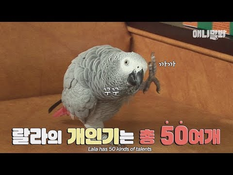A parrot which is so good at mimicry