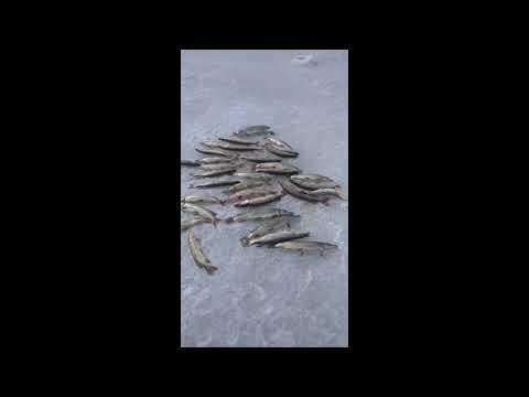 Рыбалка 2020 .