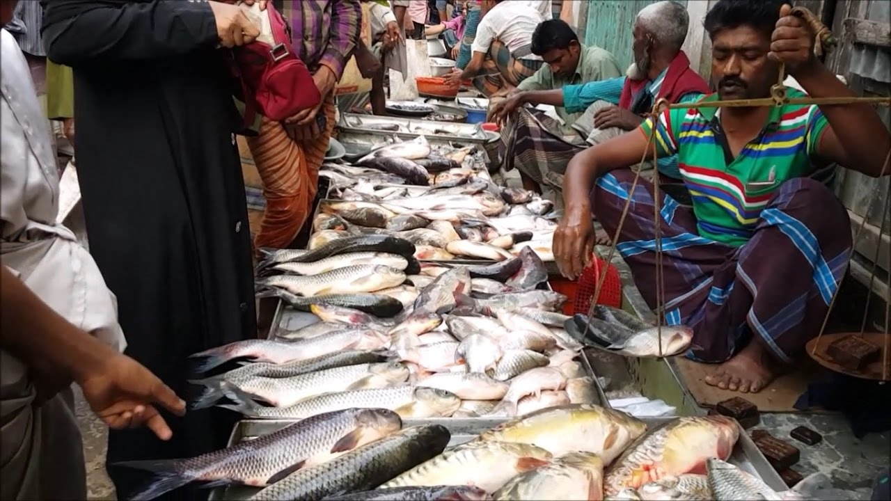 Incredible village fish aroth big rural village fish for Village fish market