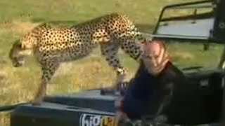 Video A female cheetah uses a warthog as practise prey for her cubs  - BBC wildlife download MP3, 3GP, MP4, WEBM, AVI, FLV Juni 2018
